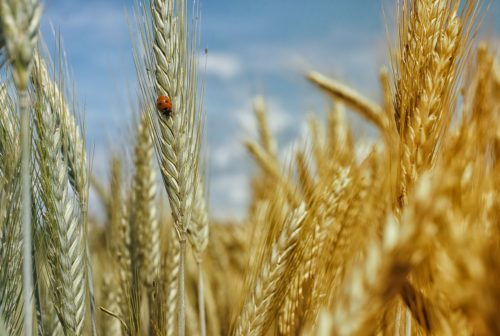Is the Gluten Free Diet Just a Fad?